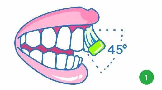 巴氏刷牙法步骤图解1