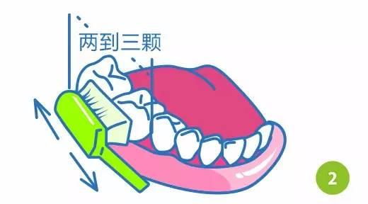 巴氏刷牙法步骤图解2