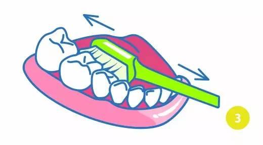 巴氏刷牙法步骤图解3