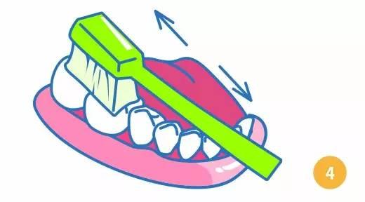 巴氏刷牙法步骤图解4