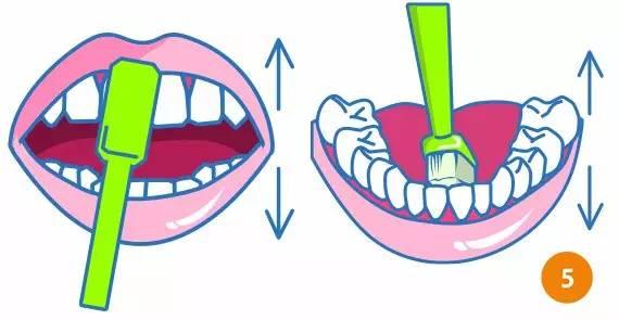 巴氏刷牙法步骤图解5