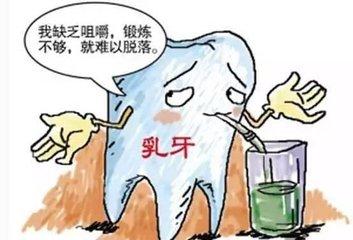 乳牙松动可加强咀嚼