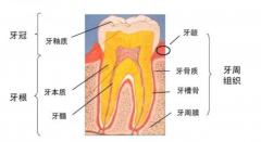 龋齿只剩牙残冠怎么修复牙齿,这颗牙还能保住吗?