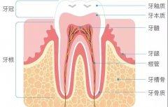 深龋补牙后隐隐作痛怎么办?该观察还是重新治疗?